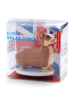 Solar Corgi.seen it all...