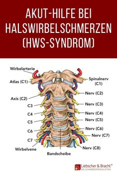 Daily Health Tips: Search results for HWS-Syndrom Muscle Fitness, Yoga Fitness, Health Fitness, Muscle Fascia, Holy Body, Cervical Spondylosis, Cervical Vertebrae, Daily Health Tips, Yoga Quotes