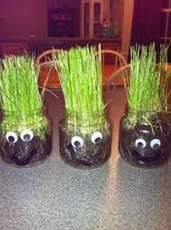 Homemade Chia Pets - Perfect for kids to do and have a lot of fun doing it! Being the Class Parent i am in charge of our Parties and this was what we did for our Earth Day Learning Experience! Stem Science, Preschool Science, Early Learning Activities, Activities For Kids, Fun Crafts, Crafts For Kids, Chia Pet, Spring Party, Sunday School Crafts