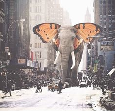 Elephant Butterfly in Chicago