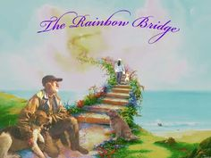 Owners reunite with their lost pets at the Rainbow Bridge. I received this card from the vet after the loss of my beloved Kramer Dog Quotes, Animal Quotes, Dog Poems, Bridge Tattoo, Animals And Pets, Cute Animals, Dog Memorial Tattoos, Dog Heaven, Dog Information