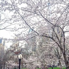 Finally: starting to look like Spring in the city. #NYC