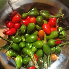 Chile piquin, a tiny, very hot chile used as a condiment. #mexicanfood mexicanfoodjournal.com