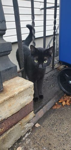 Please keep your black kitties indoors and safe for Halloween. Some people do not have good intentions. Puppies And Kitties, Cats And Kittens, Doggies, Black Kitty, Black Cats, I Love Cats, Cute Cats, Bear Puppy, Baby Animals