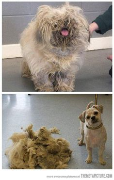 As a groomer, I've seen this one too many times. If you don't want to take care of them don't get them!