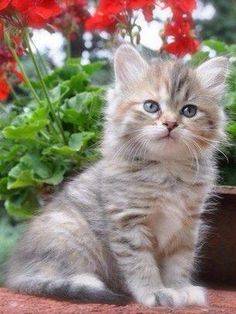 Cats and dogs are the fiercest of enemies! Cute Kittens, Puppies And Kitties, Cute Baby Cats, Cute Baby Animals, Animals And Pets, Cute Puppies, Fluffy Kittens, Pretty Cats, Beautiful Cats