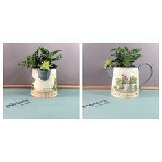 succulent mimoss.com Plant Design, Planter Pots, Succulents, Succulent Plants