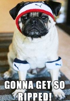 """Weekend is over, time to hit the gym!""  ^^ www.jointhepugs.com ^^  #‎PugPower #‎PugLife #‎VotePug"