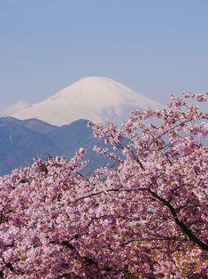 Nishihirahata Park / Matsudayama Herb Garden, Matsuda, Kanagawa, Japan, sakura, cherryblossom