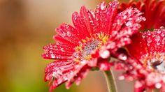 Flower for wallpaper hd