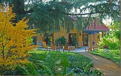 """""""Stuck in Lodi With Lots of Good Wine."""" Edible Arts. Written by Dwight Furrow. Regional review. Mentions of Lodi Wine & Visitor Center, St. Amant Winery, Harney Lane Winery, Acquiesce Winery & Vineyards and Kidder Family Winery. #Lodi #wine #travel"""