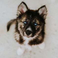Those puppy dog eyes adorable Super Cute Puppies, Cute Dogs And Puppies, Doggies, Cute Funny Animals, Cute Baby Animals, Animals And Pets, Beautiful Dogs, Animals Beautiful, Beautiful Places