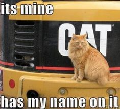 trendy funny cats with captions hilarious humor animal pictures Animal Captions, Funny Animals With Captions, Cute Funny Animals, Funny Cute, Super Funny, Cat Captions, That's Hilarious, Freaking Hilarious, Crazy Funny