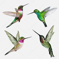 Find COLIBRI stock images in HD and millions of other royalty-free stock photos, illustrations and vectors in the Shutterstock collection. Thousands of new, high-quality pictures added every day. Hummingbird Painting, Hummingbird Tattoo, Hummingbird Sketch, Hummingbird Illustration, Feather With Birds Tattoo, Bird Feathers, Mädchen Tattoo, Paint Tattoo, Tattoo Bird