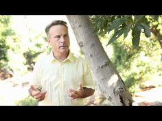 Alex MacLachlan, California Avocado Farmer. #CAgrown http://californiagrown.org/farmers/profile.php?grower=avocados