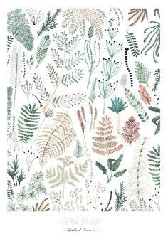 Sara Boccaccini Meadows for Oh My Home Art And Illustration, Botanical Illustration, Illustrations, Design Floral, Motif Floral, Print Design, Boho Pattern, Nature Pattern, Illustration Botanique