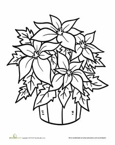 Poinsettia Plant Coloring Page
