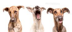 Adoré cuando vi estas fotos de 3 perros adoptados! | IsPop