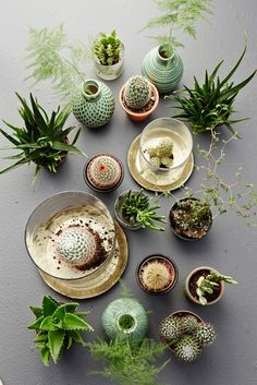 cactus, flatlay photography, from above on charcoal background, succulents in pots