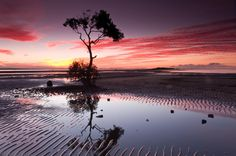 No fluffy title just a pic of a mangrove tree during sunset at low tide (Brisbane Australia). [1280x850][OC]