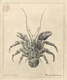 Biomechanical Illustrations of Crustaceans by Steeven Salvat