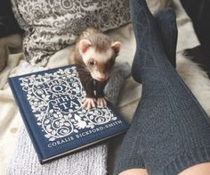 Chris' Ravenclaw Aesthetic images from the web