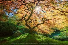 4 Tips for Taking Better Photographs of Trees from Digital Photography School