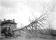 Tree Moving In The Early Days On Long Island