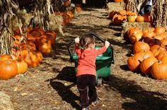 For Bay Area families, our region offers a bevy of pumpkin patch experiences -- from the patch in the city to the revered u-pick pumpkin experience in Half Moon Bay. Here's a list of our favorite pumpkin patches that will delight every member of your family.