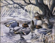 Charles Tunnicliffe  -  Teal