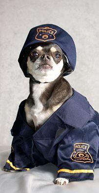 Chihuahua Policeman