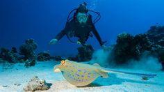 Bucket list item: Try scuba diving - KILROY - Ting å gjøre før du dør: Prøv dykking http://travels.kilroy.no/turer-og-aktiviteter/kurs/dykkerkurs #diving #ocean #underwater
