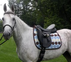 cute saddle pad, to bad i ride western.. but the horse is gorgeous