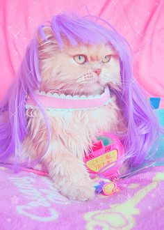 Kitty loves pastel