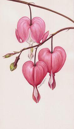 Löjtnantshjärta - Botanical Portrait II - FLOWER by Eunike Nugroho, via Behance Art And Illustration, Flowers Illustration, Illustrations, Botanical Drawings, Botanical Prints, Art Floral, Floral Flowers, White Flowers, Watercolor Flowers