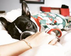 Cuddle time in santas pjs  Bracelet by @barksandbijoux  #dogsofinstaworld  #LOVEABULLY #frenchies1 #frenchieoverload #bullyinstafeature #bullyinstagram  #jj_welovepets #sunnypicchallenge #nothingisordinary #bestwoof #houndsbazaar #bullylife #petbox #a_dogsworld  #animalbuzz #dogsofinstagram #lacyandpaws #citydogliving #rainbow_wall  #ruffpost #french_bulldogs #excellent_dogs #meowvswoof #featureperfectpups #frenchielove_feature #mydogiscutest #cutepetclub #INSTAFRENCHIE #frenchiegram…