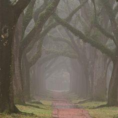 Fuzzy Path