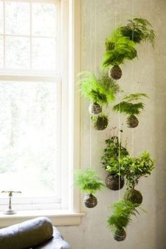 """KOKEDAMA The name is derived from the Japanese words for moss (""""koke"""") and ball (""""dama""""), essentially creating a string garden. Kokedama is a great option for displaying low-light loving plants and can even be arranged as a hanging garden. String Garden, Indoor Green Plants, Garden Plants, Moss Garden, Japanese Indoor Plants, Planter Garden, Herb Garden, Indoor Ferns, Hanging Plants Outdoor"""