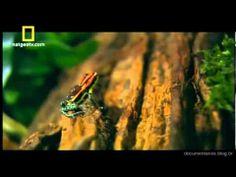 ▶ NatGeo - Amazônia Selvagem - Berço da vida - YouTube