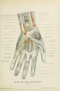essential anatomy 3 apk kickass
