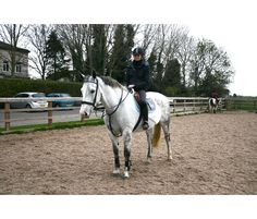 Gorgeous dapple grey mare riding club 10-year-old 16hh for sale | HorseDeals.co.uk