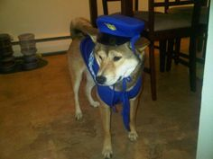 Molly dressed up as a cop for Halloween