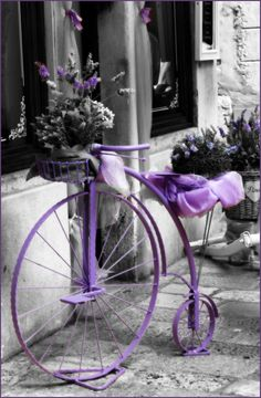 """The Lavender Bicycle"", Rovinj, Istria, Croatia by Robin Denton- Great photograph!"