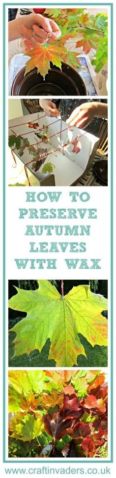 Capture the beauty of fall by preserving leaves in their beautiful, autumn colours using wax - check out our super easy tutorial