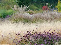 Un jardin libre et naturel... #permaculture #jardin #garden  #nature #sauvage #fleurs