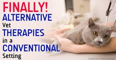 Dr. Becker, Dr. Raditic, and Dr. Conway talk about integrative veterinary medicine, with focus on alternative and complementary therapies for animals. http://healthypets.mercola.com/sites/healthypets/archive/2014/11/02/integrative-veterinary-medicine-fellowship.aspx