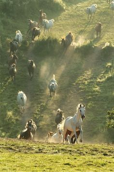 This is why I love horses JOB 39:19-25 it laughs at fear and is  afraid of nothing!