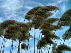 Foi um vento que passou, que te trouxe e te levou...