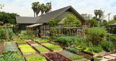 This incredible tiny farm produces over 6,000 pounds of food per year on only 1/10 acre.