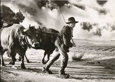 Working in the fields - vintage Portugal by Anibal Sequeira Portugal, Black White Photos, Black And White, Brassai, Monochrome Photography, Portuguese, Animals And Pets, Vintage Photos, Brazil